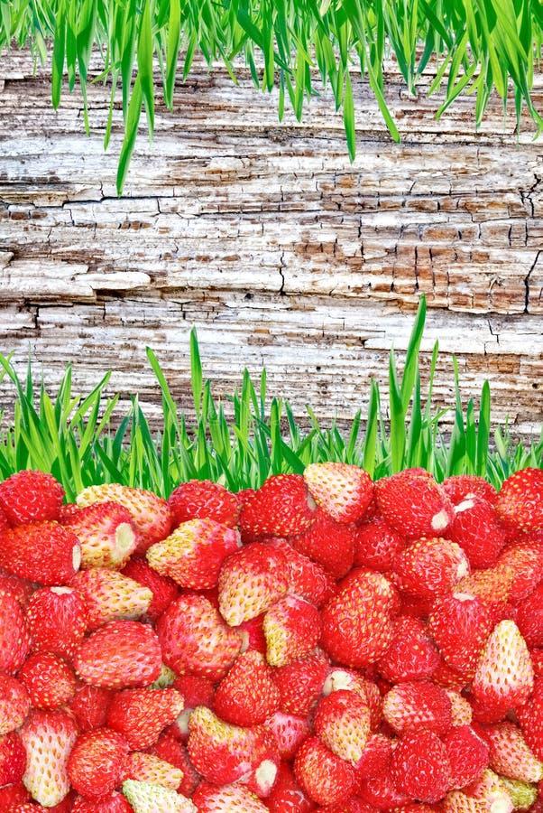 Feld von Erdbeeren und Gras und hölzerner Hintergrund stockbild