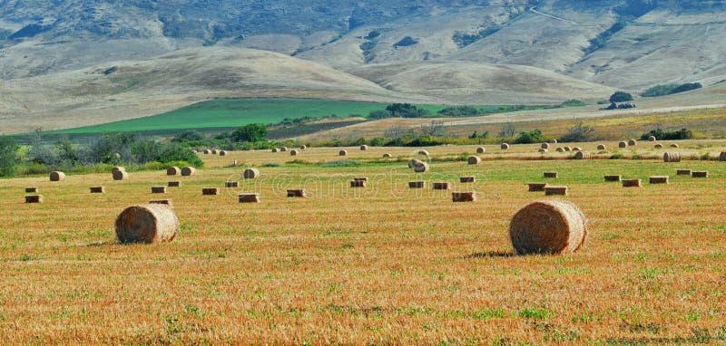 Feld von erfassten Heuballen mit den zentralen Kalifornien-Hügeln im Hintergrund lizenzfreies stockbild