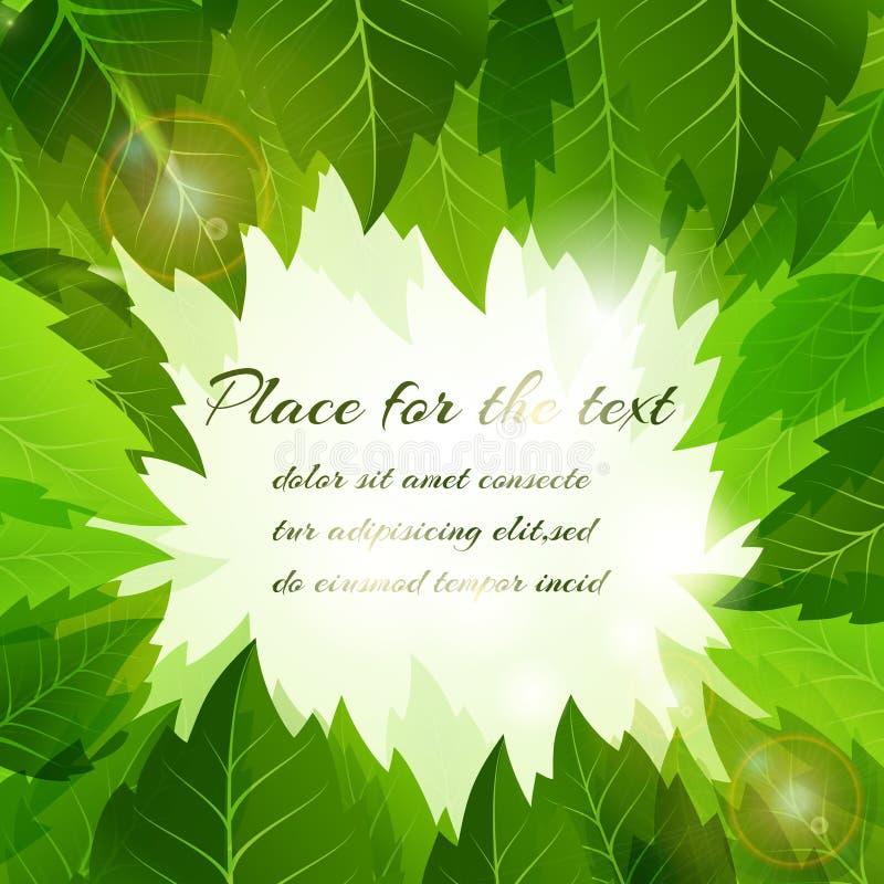 Feld von frischen grünen Sommerblättern stock abbildung