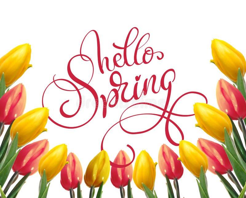 Feld von gelben und roten Tulpen auf einem weißen Hintergrund und Text hallo einem Frühling Kalligraphiebeschriftung stockbilder