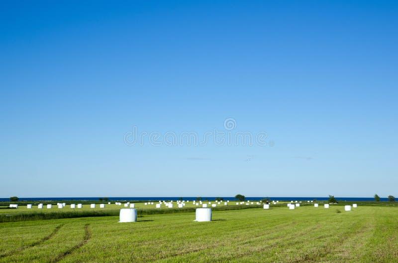 Feld von haybales lizenzfreie stockbilder