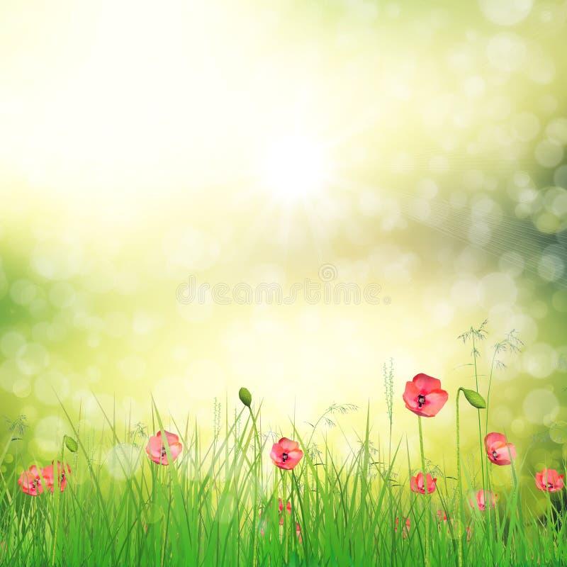Feld von Mohnblumenblumen lizenzfreie abbildung
