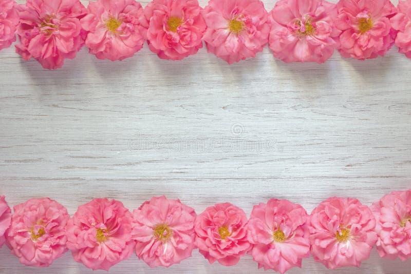 Feld von schönen rosa Rosen auf weißem hölzernem Hintergrund Flache Lage, Draufsicht, Kopienraum stockfoto