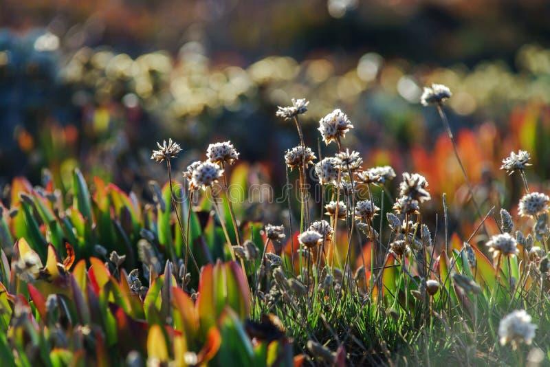 Feld von schönen wilden Blumen lizenzfreies stockbild
