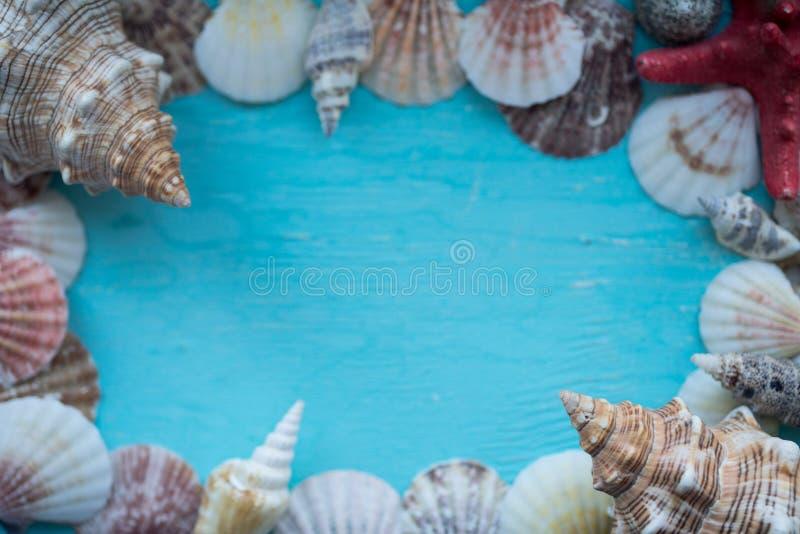 Feld von Seeoberteilen auf einem blauen Hintergrund lizenzfreie abbildung