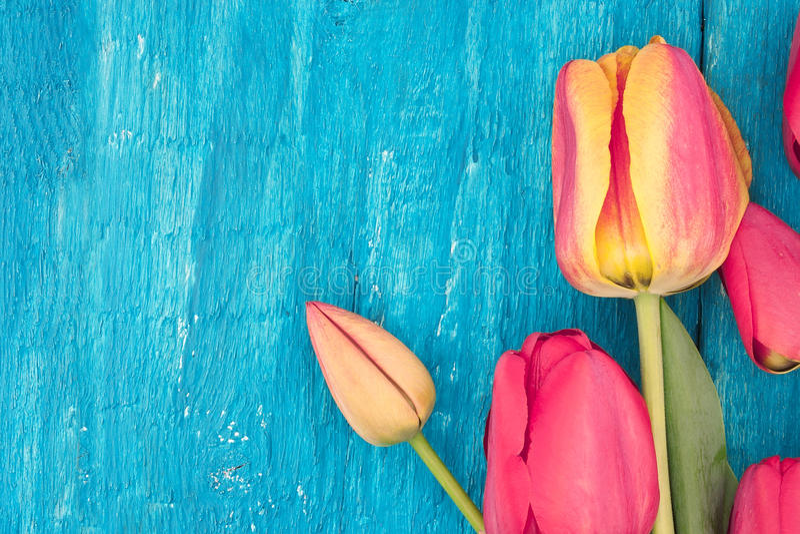 Feld von Tulpen auf rustikalem hölzernem Hintergrund des Türkises Frühlingsflorida lizenzfreie abbildung