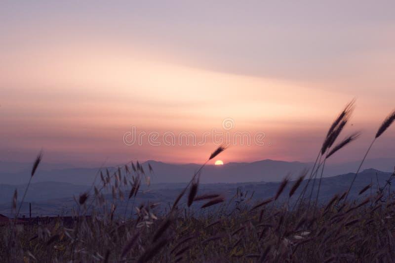 Feld von weath bei Sonnenuntergang in Montagano, Campobasso, Molise, Italien stockbild