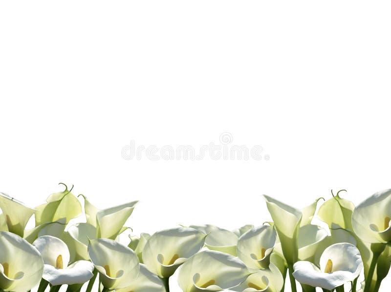 Feld von weißen Blumen png vektor abbildung