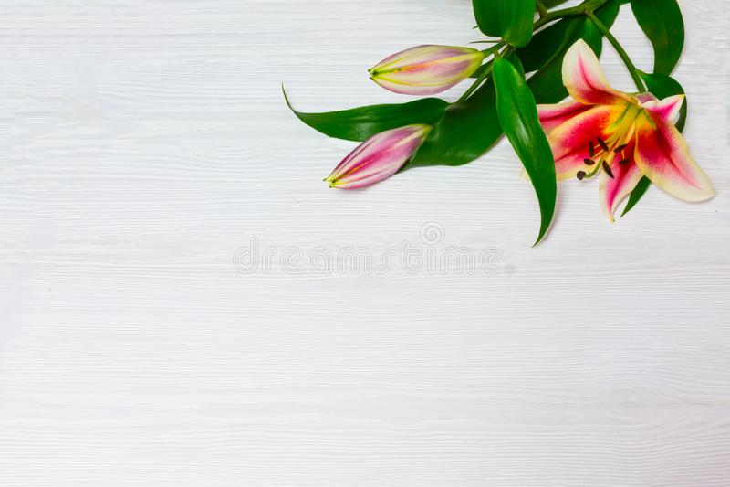 Feld von weißen Lilien auf einer Draufsicht des weißen hölzernen Hintergrundes Blüht schönen Blumenhintergrund der weißen Blumen  lizenzfreie stockfotos