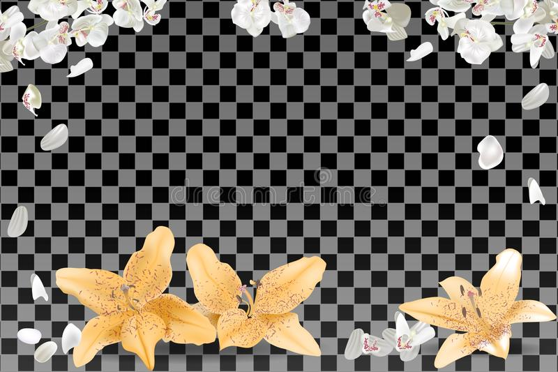 Feld von weißen und gelben Blumenblättern auf transparentem Hintergrund lizenzfreie abbildung