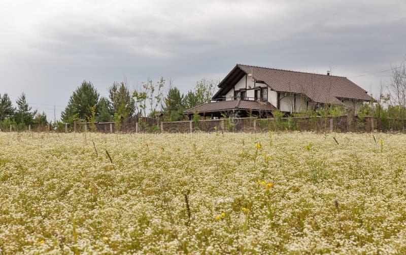 Feld von wilden camomiles vor dem modernen Haus lizenzfreie stockfotos