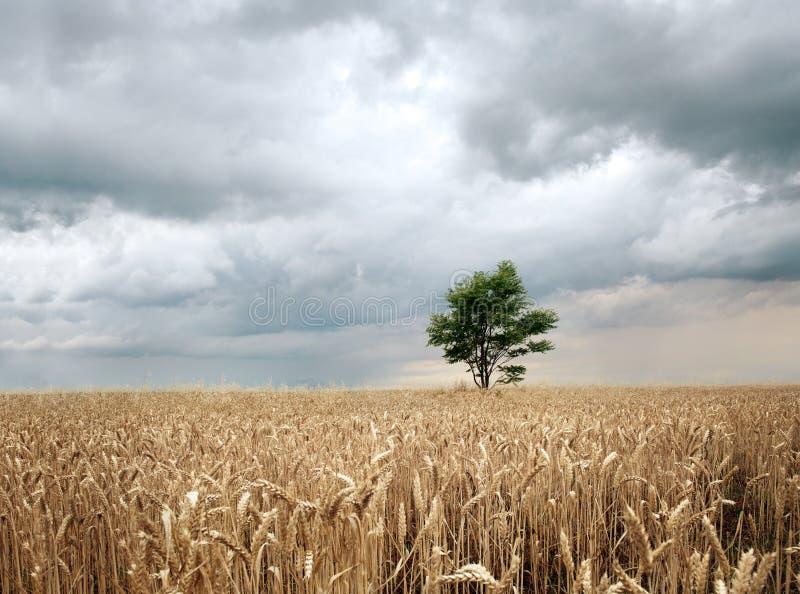 Feld vor dem Regen lizenzfreie stockbilder