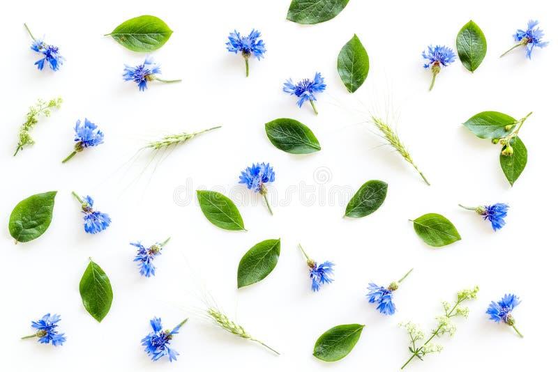Feldblumen entwerfen mit blauen Kornblumen auf weißem Draufsichtmuster des Hintergrundes lizenzfreies stockbild