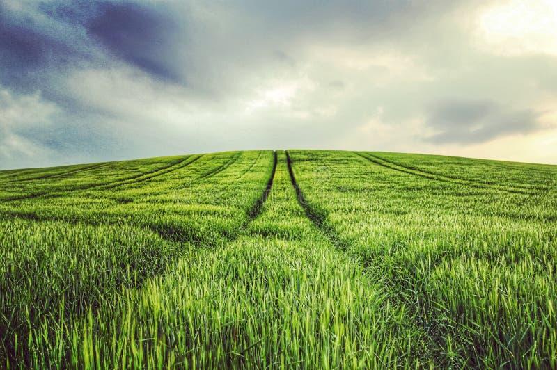 Felder des Grüns stockbild
