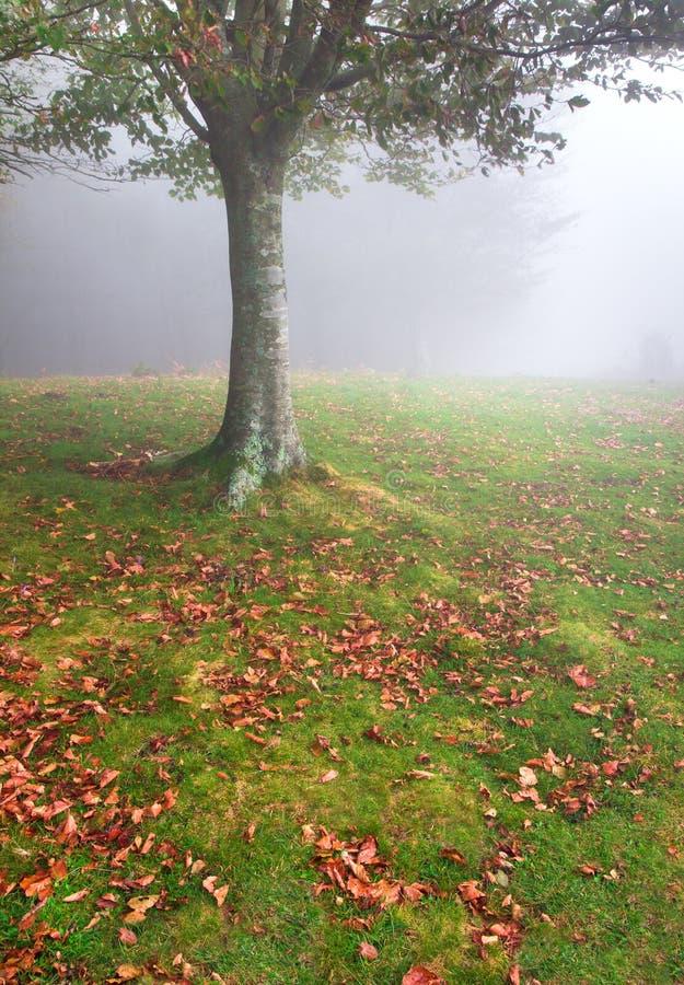 Felder im Herbst stockfotografie