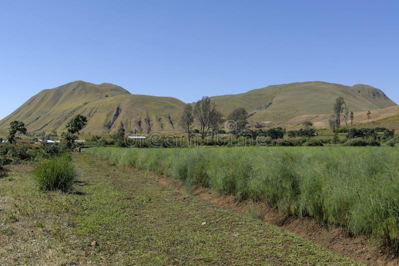 Felder in Madagaskar stockbild
