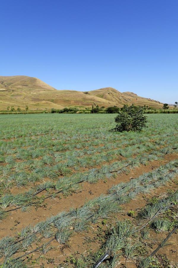 Felder in Madagaskar lizenzfreie stockbilder