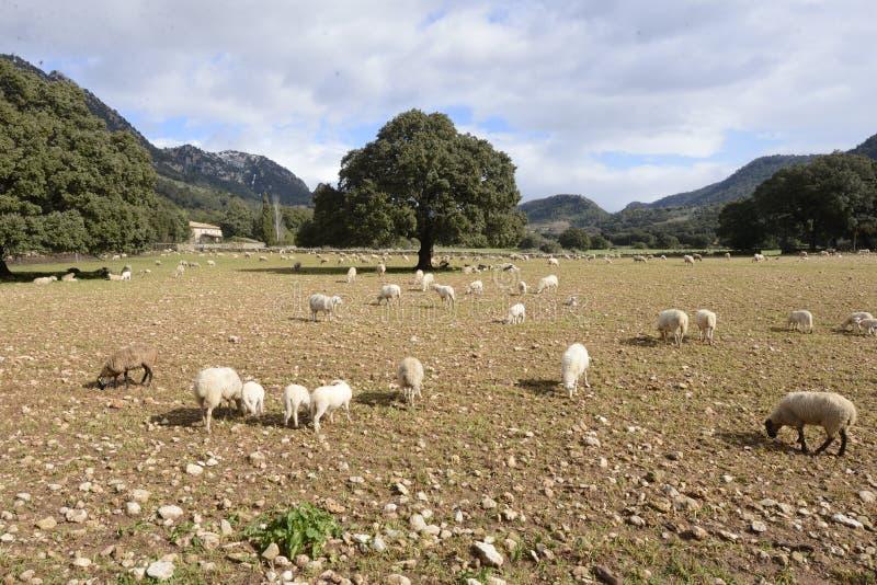 Felder in Mallorca lizenzfreies stockbild