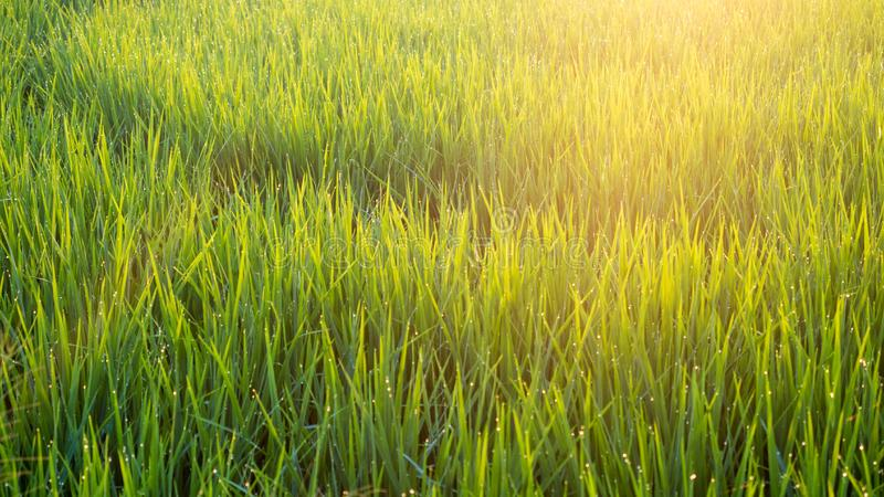 Felder mit hellem Morgen lizenzfreies stockfoto
