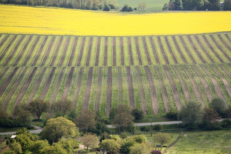 Felder mit Streifen von grünen und braunen Weinbergen stockfotos