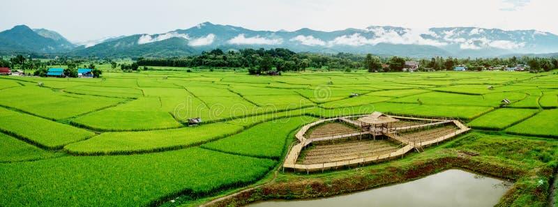 Felder in Nan, Thailand Panoramabild lizenzfreie stockfotos