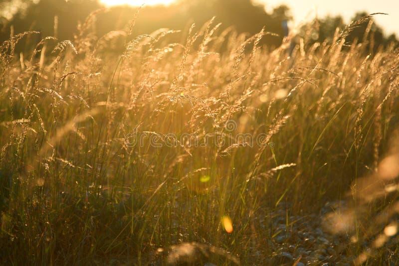 Felder am Sonnenuntergang stockfoto