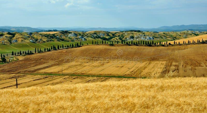 Felder in Toskana, Italien lizenzfreie stockfotos