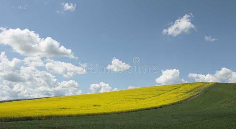 Felder unter blauem Himmel lizenzfreie stockfotos