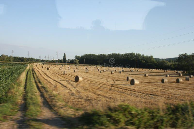 Felder vom Burgund lizenzfreies stockbild