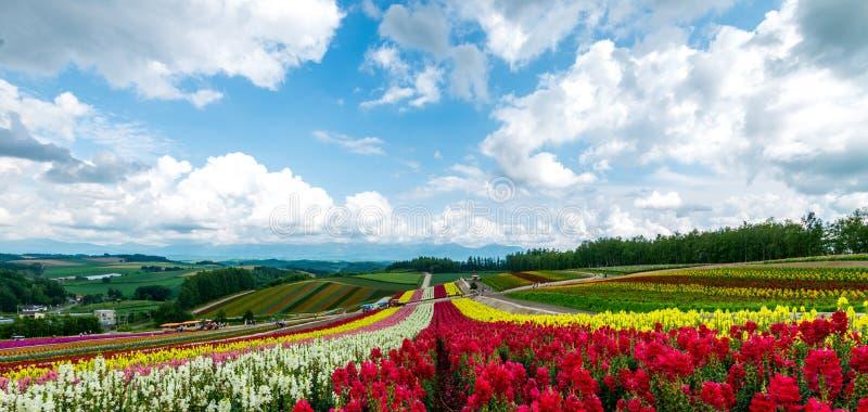Felder von Blumen Hokkaido, Japan im Juli 2015 stockfotografie