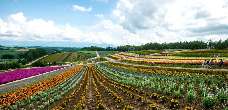 Felder von Blumen Hokkaido, Japan im Juli 2015 lizenzfreie stockbilder