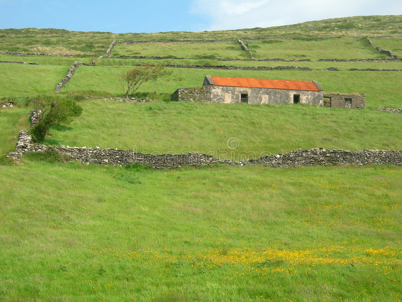 Felder von Irland - Landschaft stockbilder