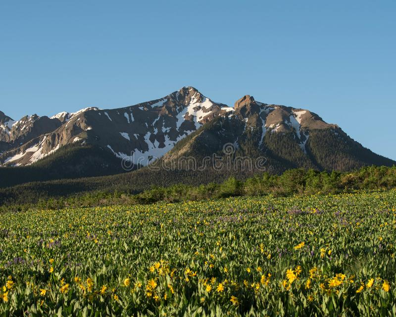 Felder von Sommer Wildflowers in Colorado stockbilder