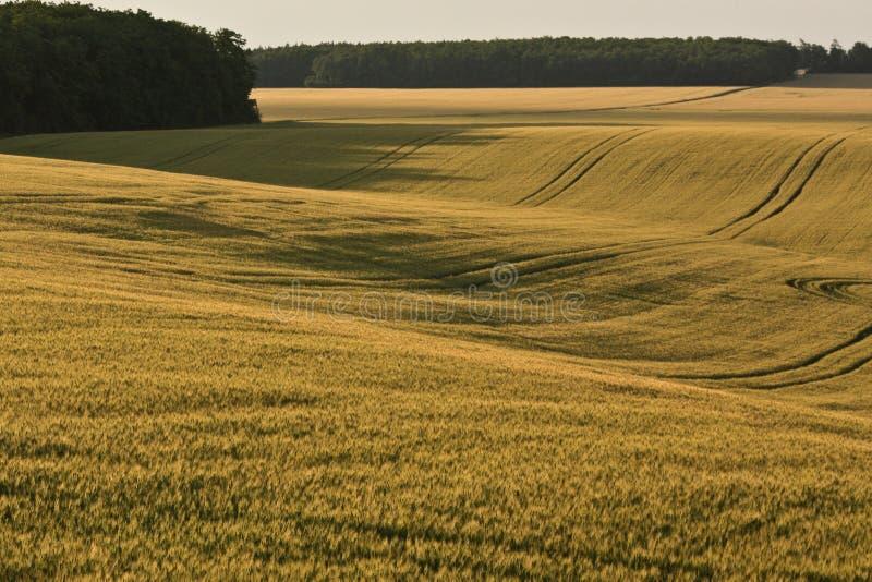 Felder von Zala stockbild