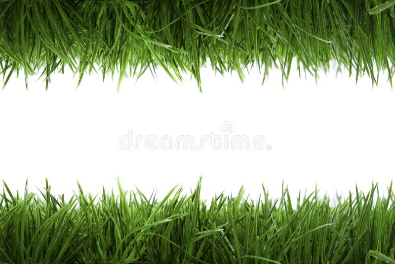 Feldhintergrund mit grünem Gras lizenzfreie stockfotografie