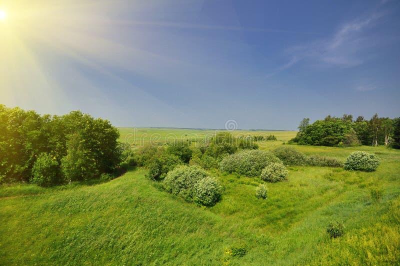 Feldlandschaft des grünen Grases lizenzfreie stockbilder