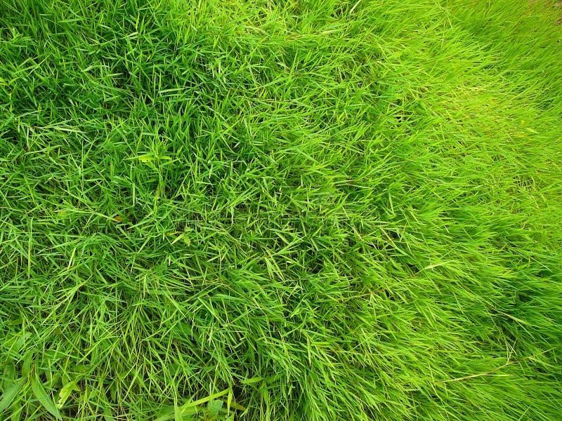 Feldnahaufnahme des grünen Grases stockbild