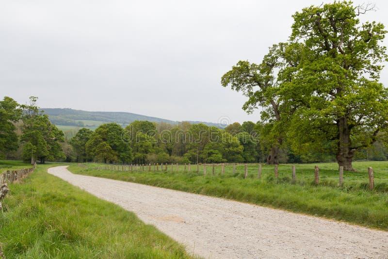 Feldweg, der durch grüne Wiese in Irland führt lizenzfreie stockfotografie