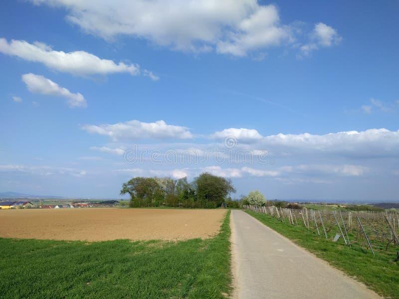Feldweg und Weinberg Ebersheim lizenzfreie stockbilder