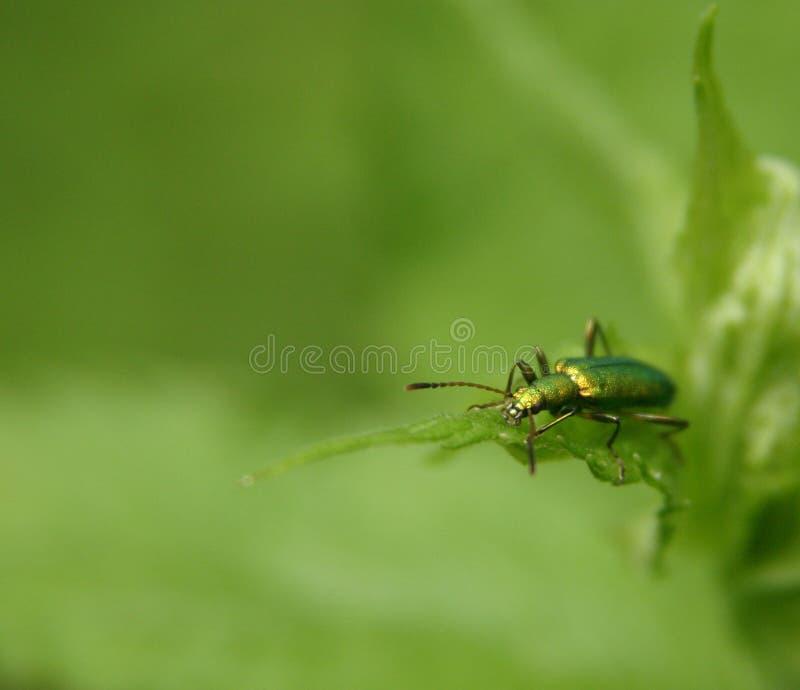 Download Felgreen fotografering för bildbyråer. Bild av buffoon - 506237
