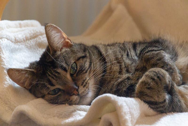 Felice ed ha svegliato appena il gatto immagini stock