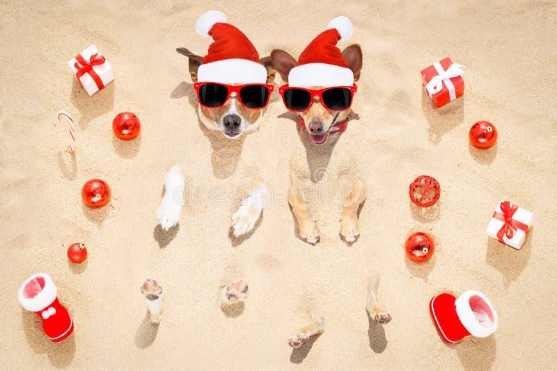 Felices perros de los chtristmas en la playa imágenes de archivo libres de regalías