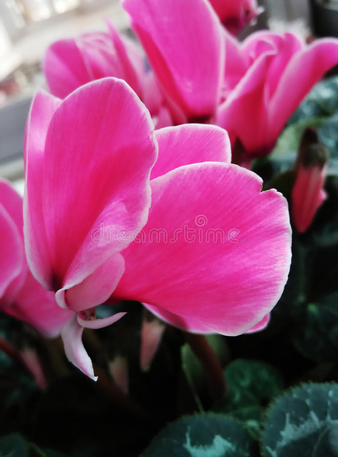 A felicidade é como as flores fotos de stock