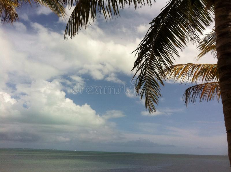 Felicidade tropical fotografia de stock