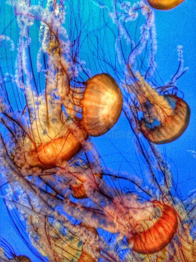 Felicità delle meduse fotografia stock