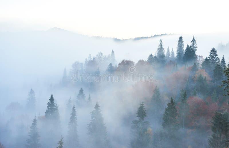 Felik soluppgång i bergskoglandskapet i morgonen Dimman över den Carpathian majestätiska pinjeskogen royaltyfri fotografi