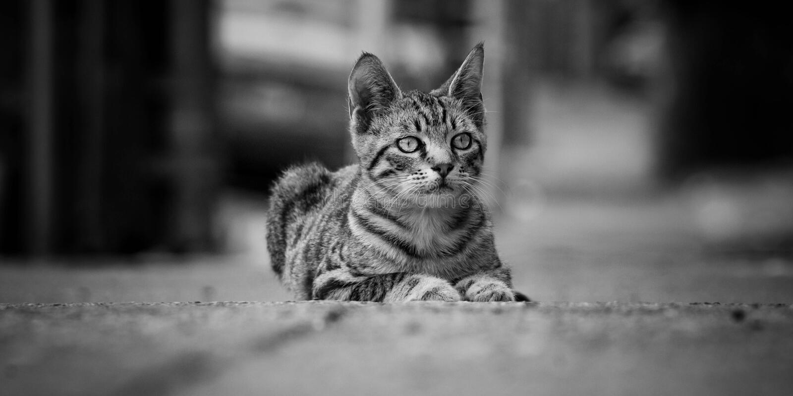 Stray Kitten royalty free stock images