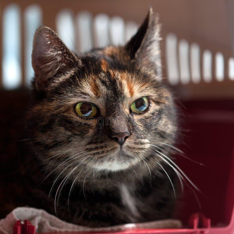 Feline cat sun beams shadows royalty free stock image