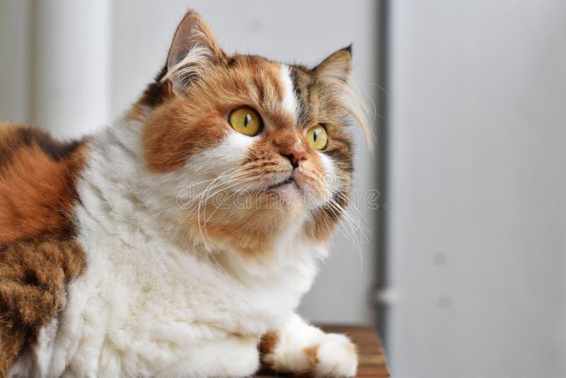 Feline furry photos stock