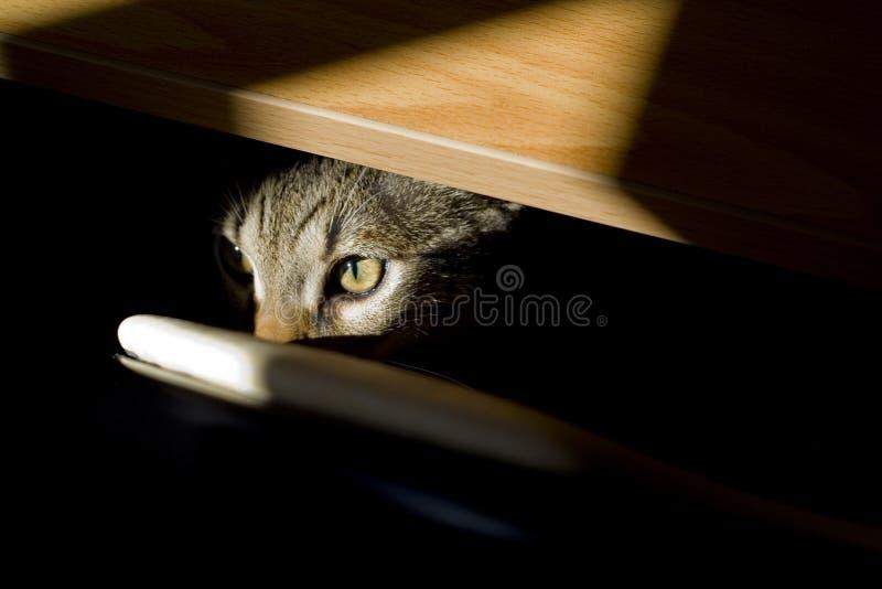 Feline Look Stock Images